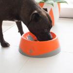 dog eating from orange dog bowl