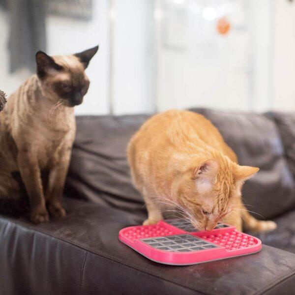 Cats with LickiMat slomo pink slow feeding bowl