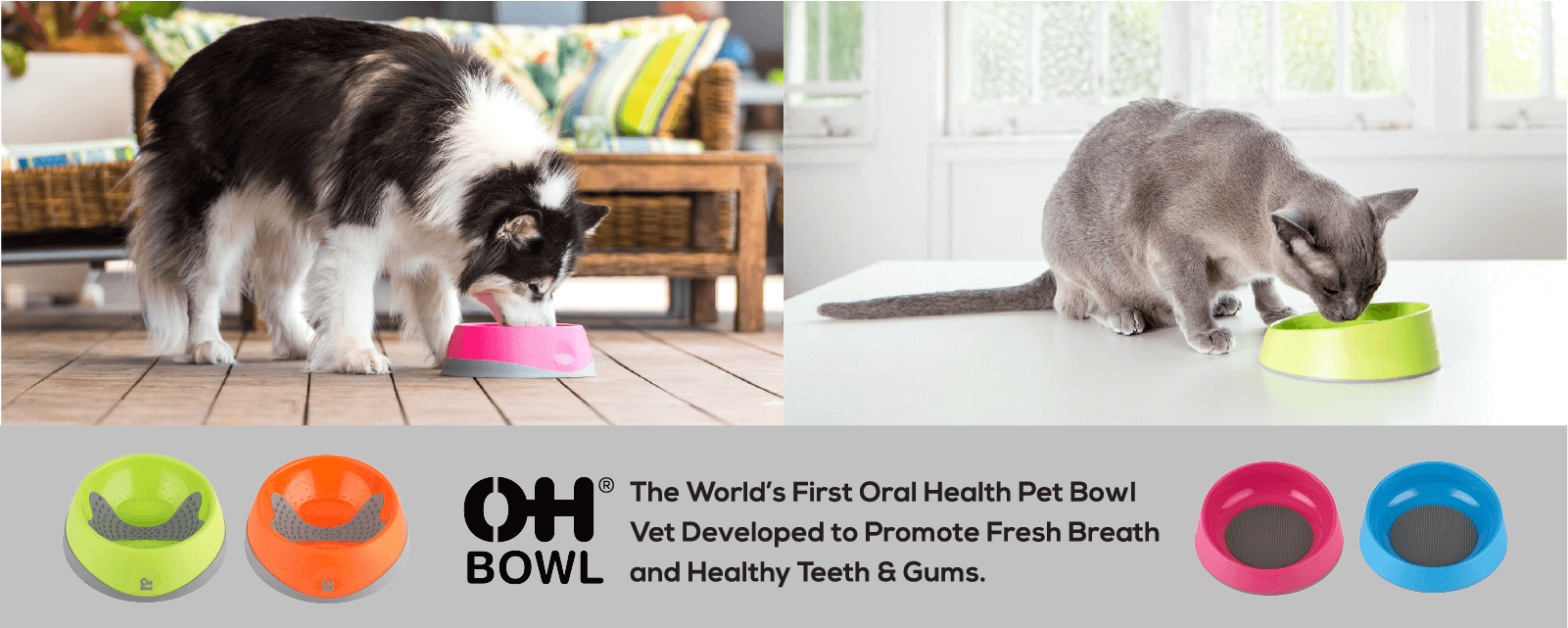 oh bowl fresh breath dog cat bowl